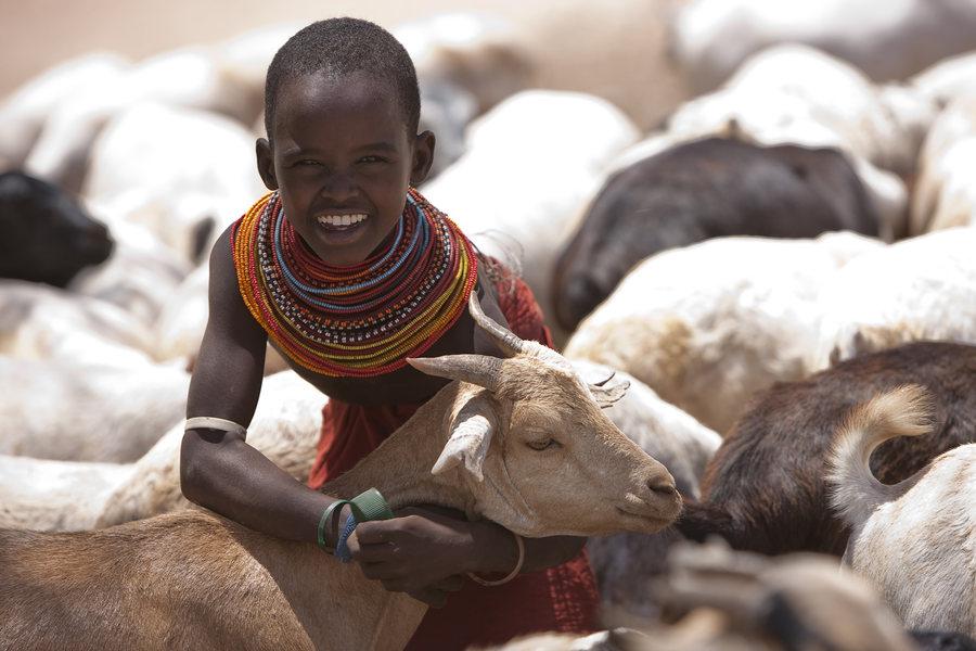 In Kenia wird an Weihnachten eine Ziege geschlachtet